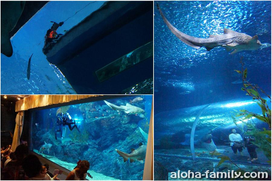 Лодка с прозрачным дном - вид снизу; кормление акул