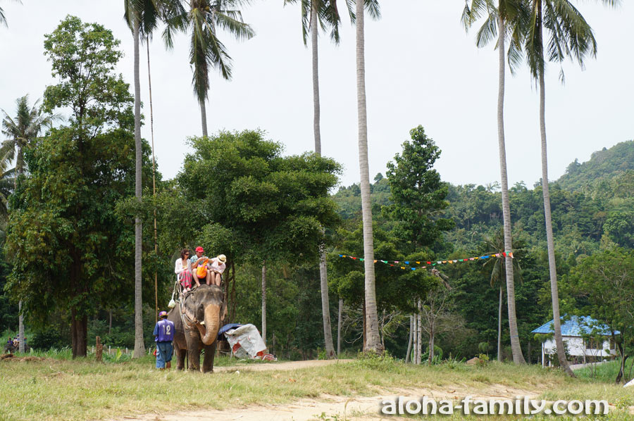 """Возле водопадов Na Muang есть """"Elephant Trekking"""" - можно покататься, но это не самое лучшее место для катания на слонах"""