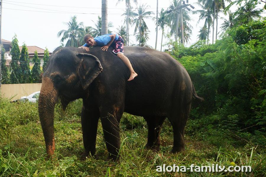 Случайная встреча со слонихой на юге Самуи)))