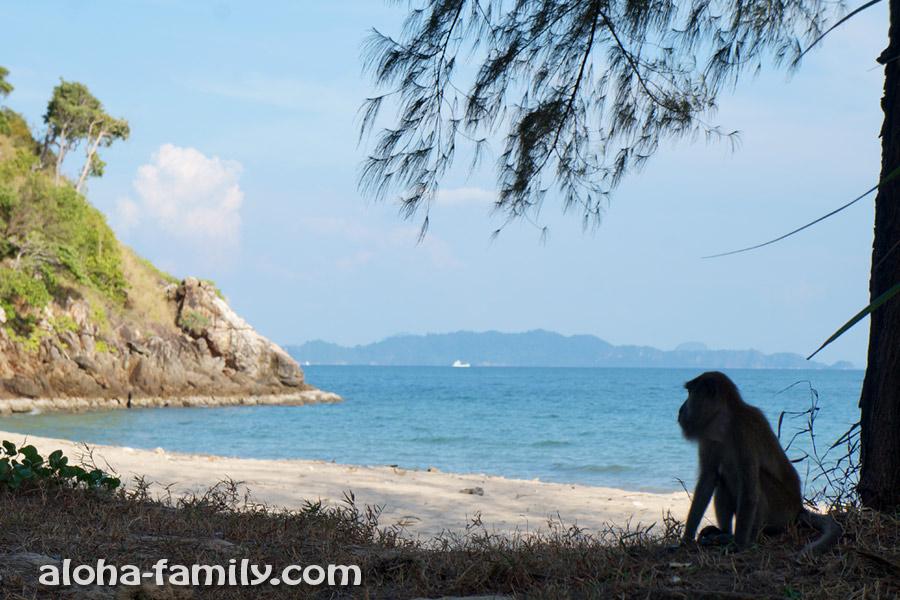 Кусочек пляжа в национальном парке и бородатая обезьяна с коварными замыслами)))