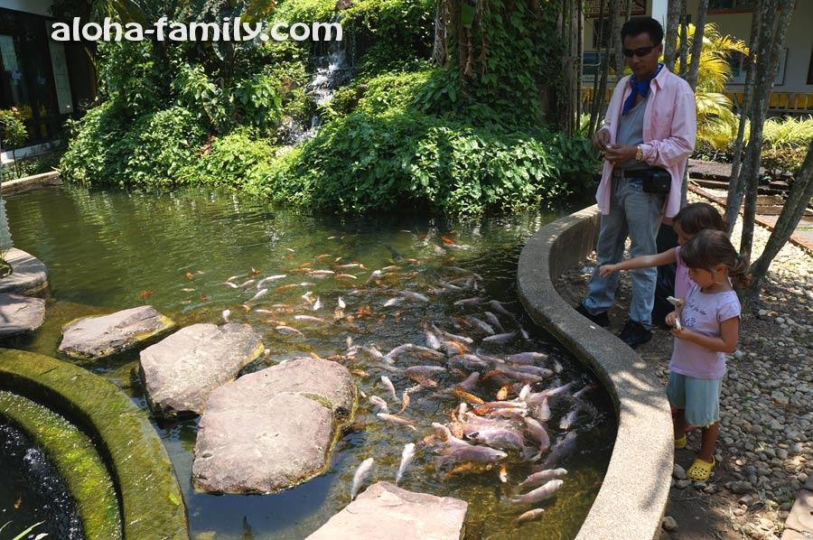 Пруд с рыбками на територии причала Краби Тауна
