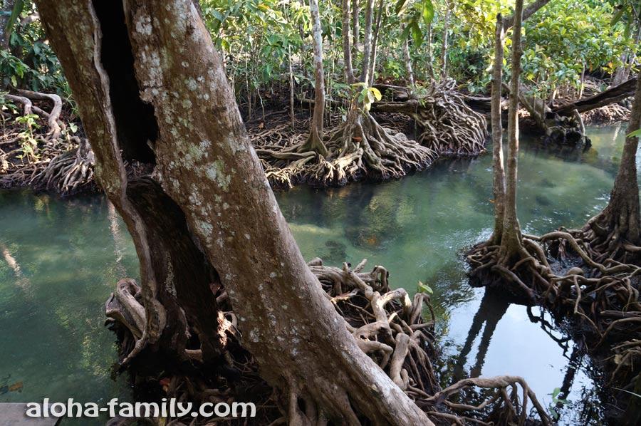 А по другую сторону мостика картина меняется - обнажённые корни деревьев выглядят чарующе