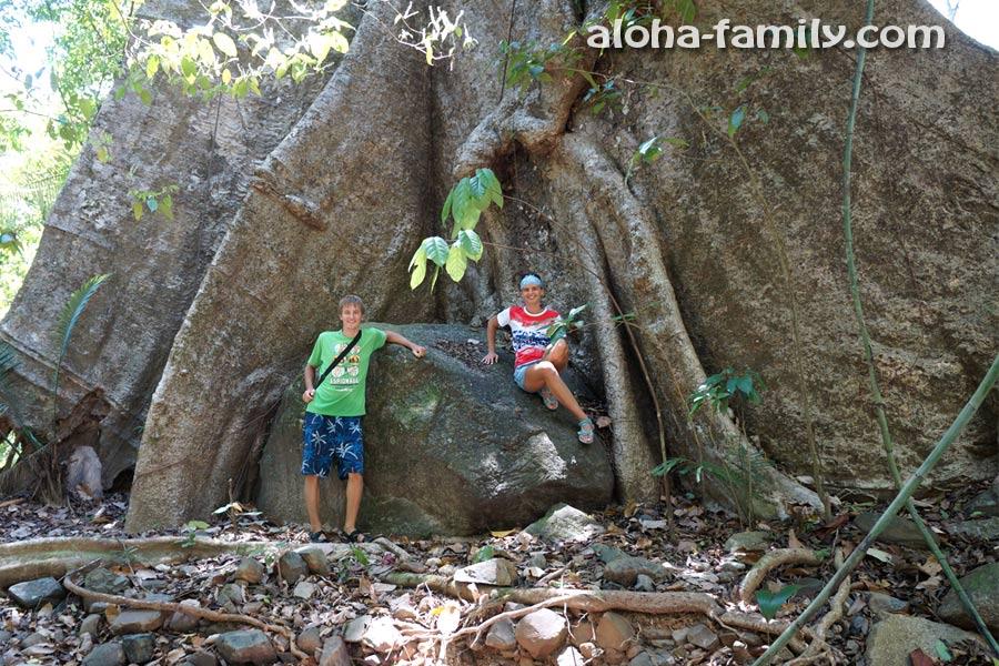 Дерево в Bencha парке по пути на смотровую площадку настолько большое, что не влазит в кадр))