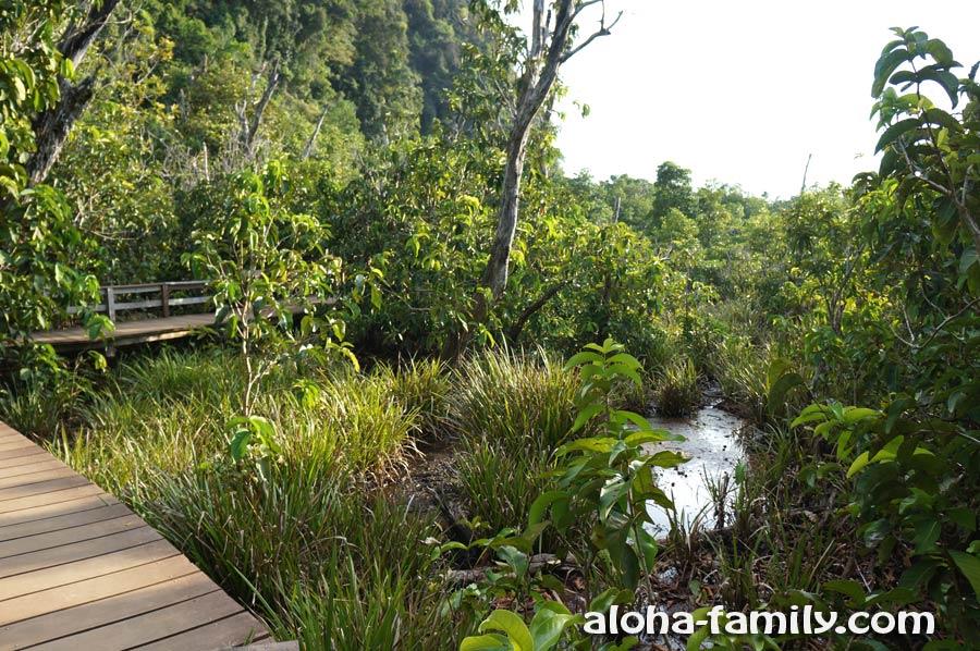 Деревянные мостики возвышаются над системою ручейков