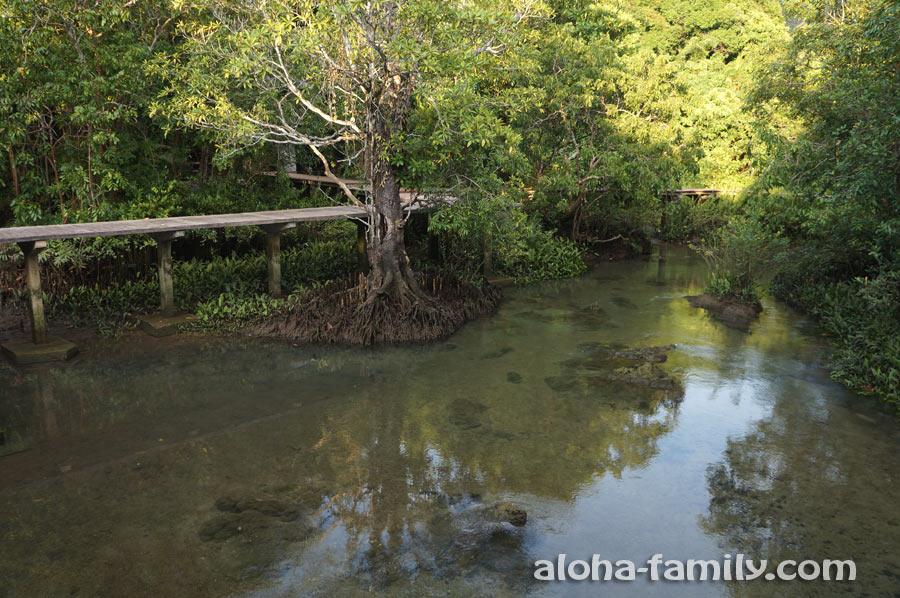 Ещё одна тропинка уходит вглубь мангрового леса