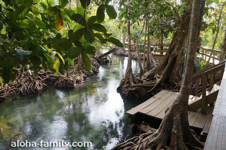 «Tha Pom» — мангровый лес и река в провинции Краби