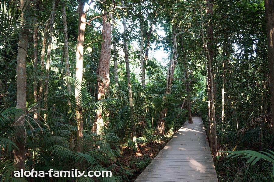 Прорезы для деревьев в дорожках-мостиках