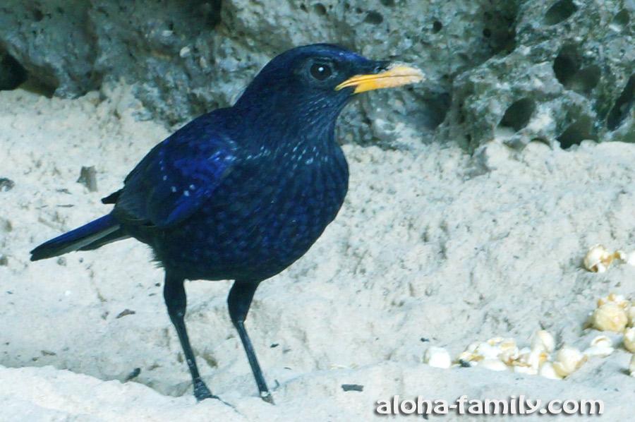Кроме всего прочего, в пещере Прананг нас встретила синяя птица! =)