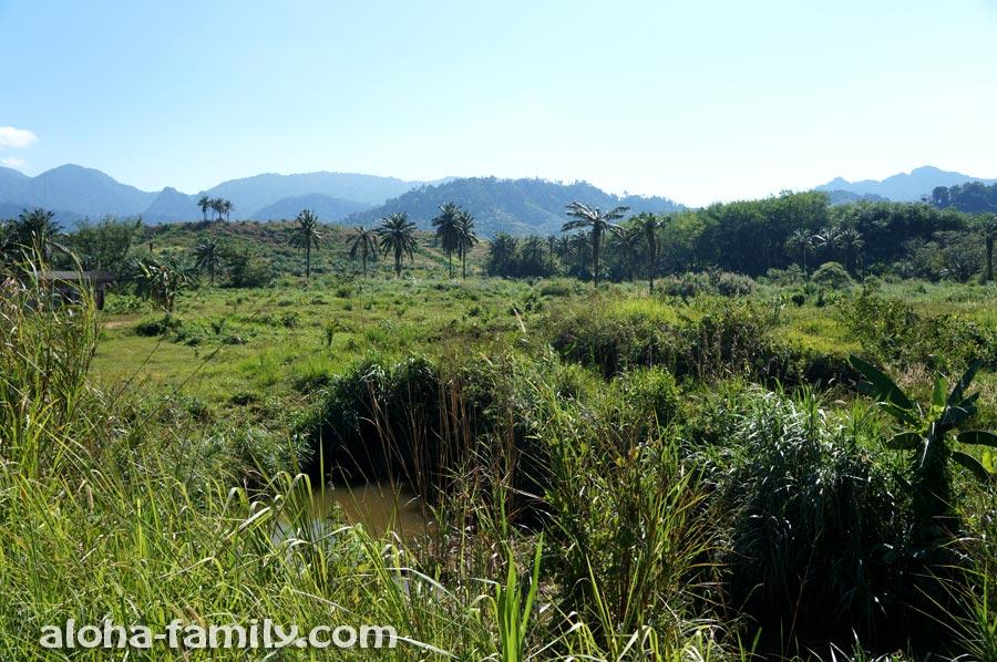 Вид на Khao Phanom Bencha с дороги
