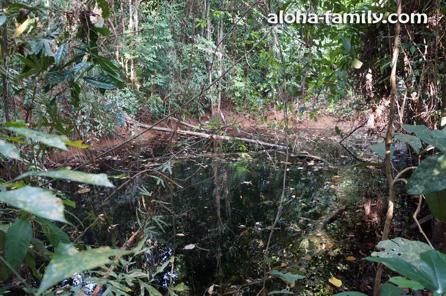 Заболоченное озеро в джунглях провинции Краби