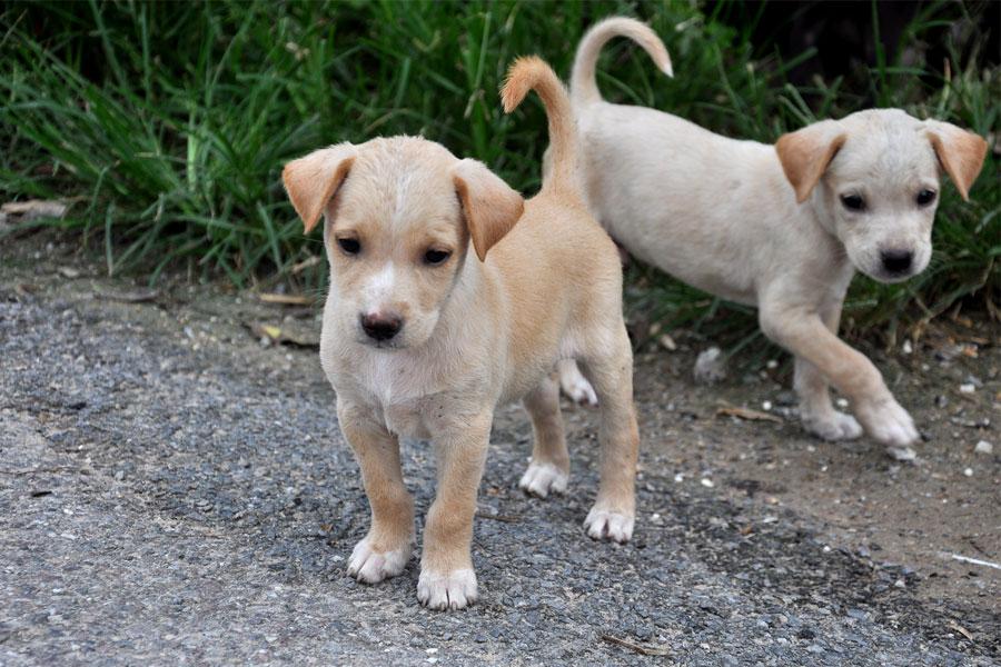 Милые щенки (ты что вчера родился? - нет, сегодня))))