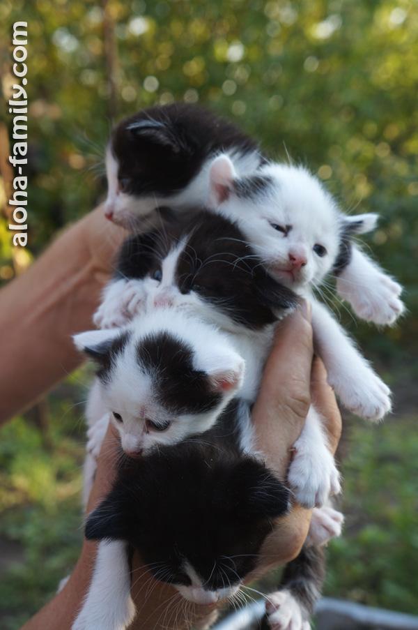 На даче у Масяни родились пятеро котят, и 10-летний двоюродный братик придумал кото-сэндвич =)