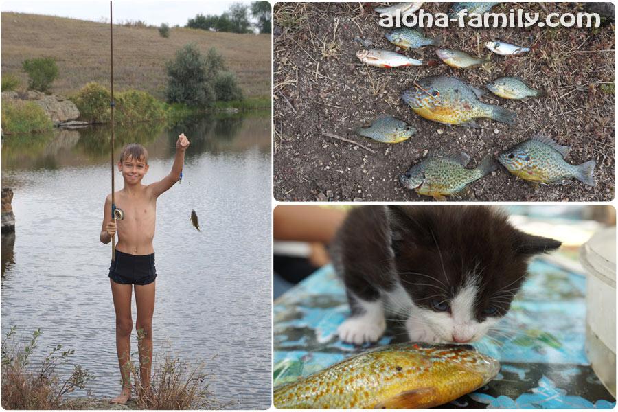 Рыбачили с братом и кормили Масяню (котята сразу поняли, что рыбка вкусная, но есть её ещё не могли)