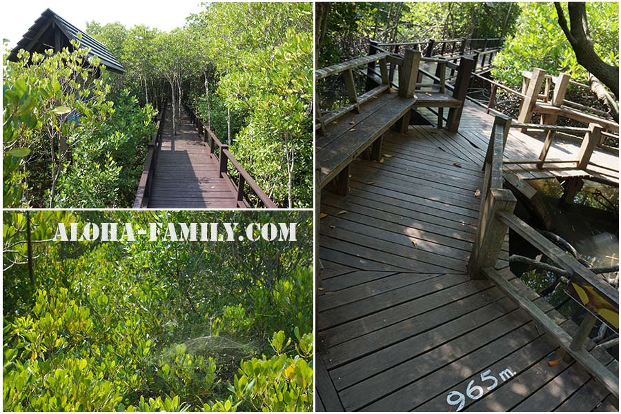 Мостики на Mangrove Trail