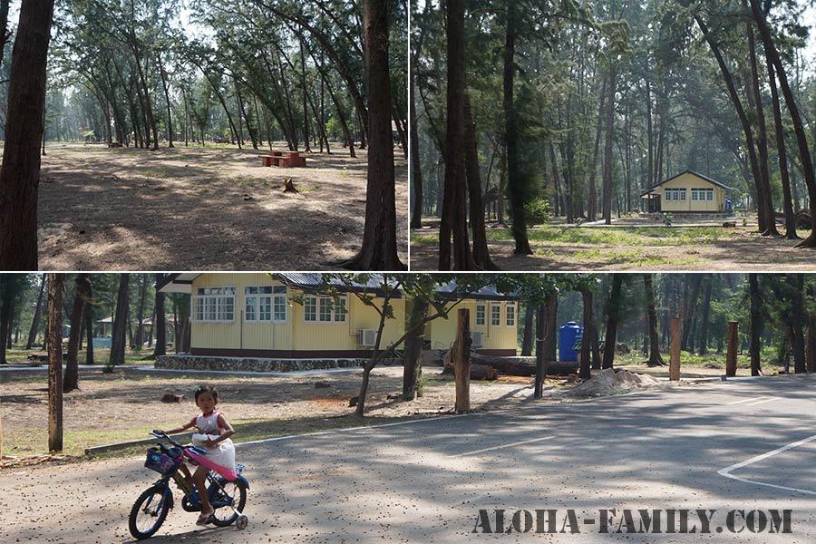 Прогулка в лесу с казуаринами