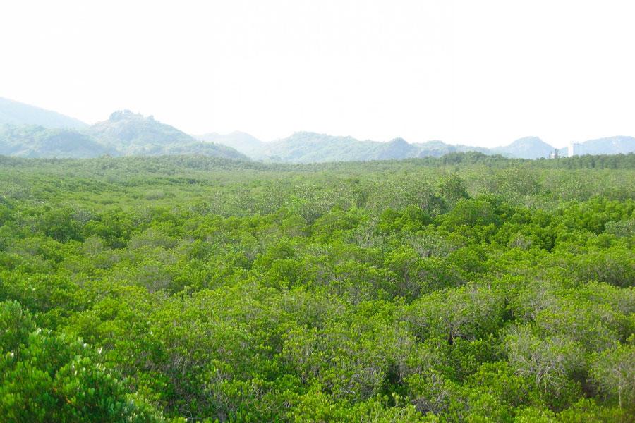 Вид на мангровый лес с высоты птичьего полёта