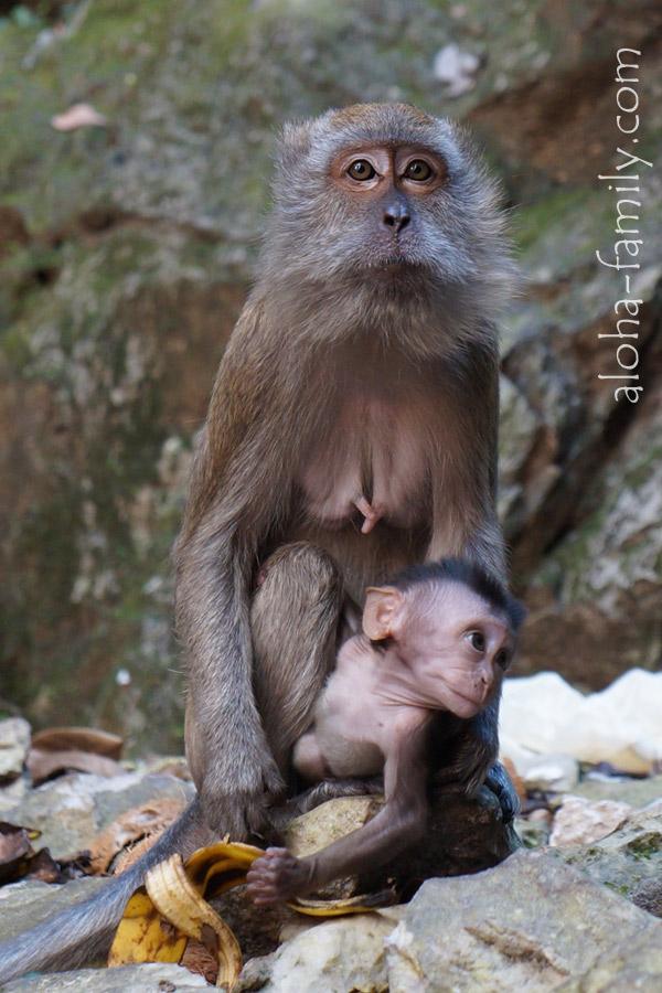 Фото на обезьяний паспорт =)