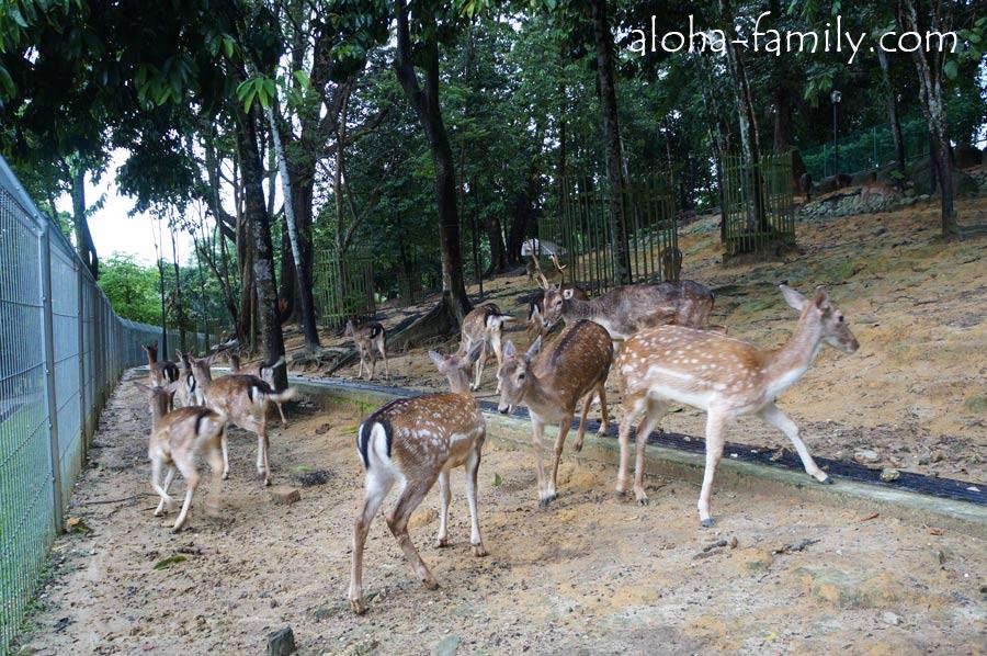Парк оленей в KL