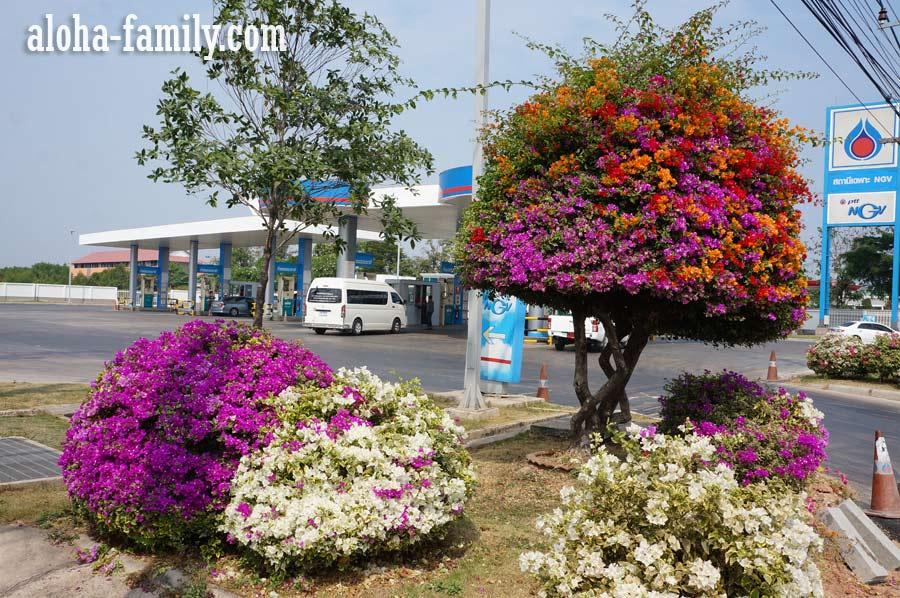 Яркое дерево на заправке по пути из Хуа Хина в Бангкок