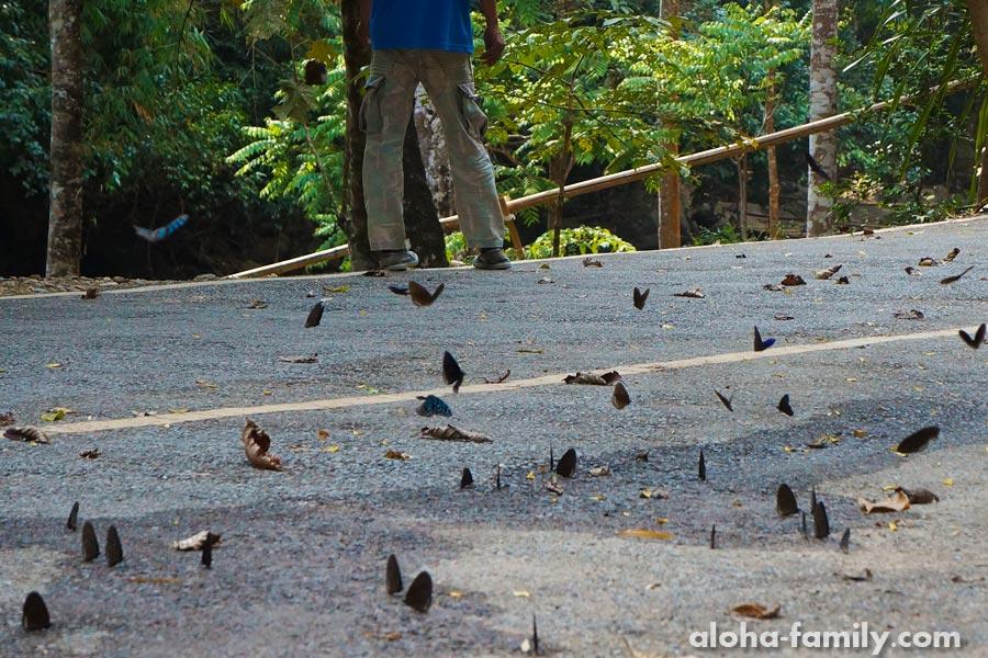Бабочки на водопаде Палау правда есть! =)