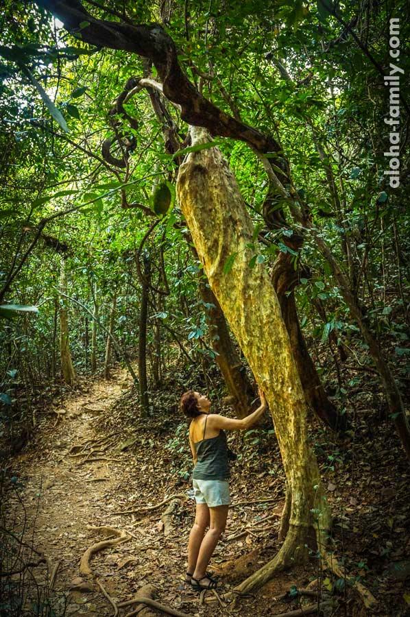 По джунглям идти тоже интересно - некоторые деревья переплетаются так, словно их нарочно кто-то запутал!