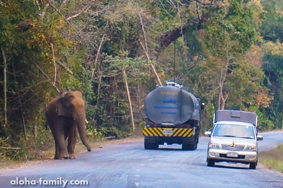 Водопад Палау в 60 км от Хуа Хина, и встреча с диким слоном