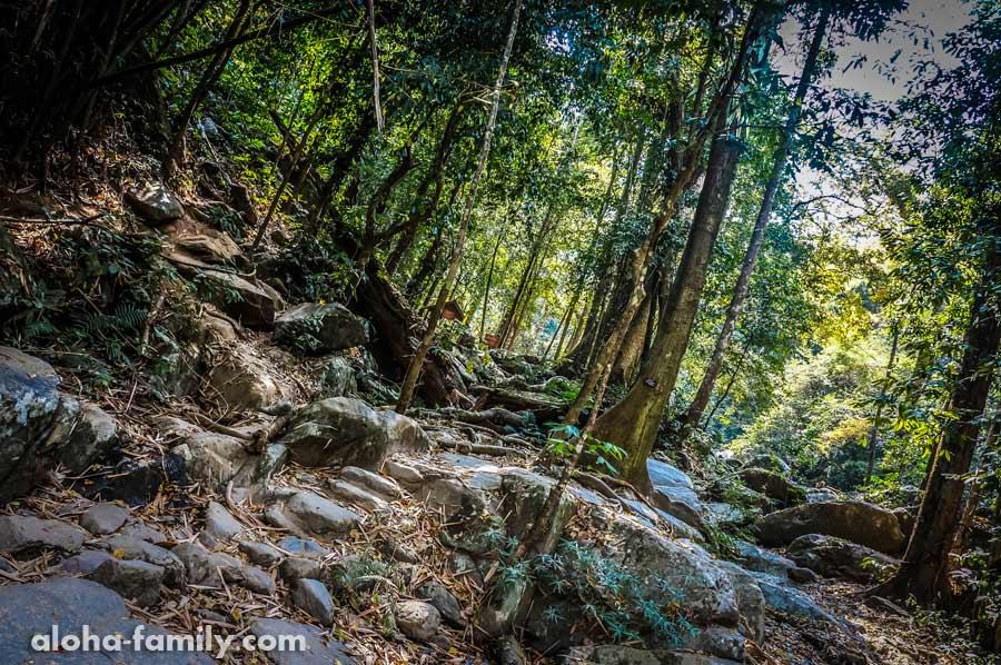 Первые шаги в джунглях