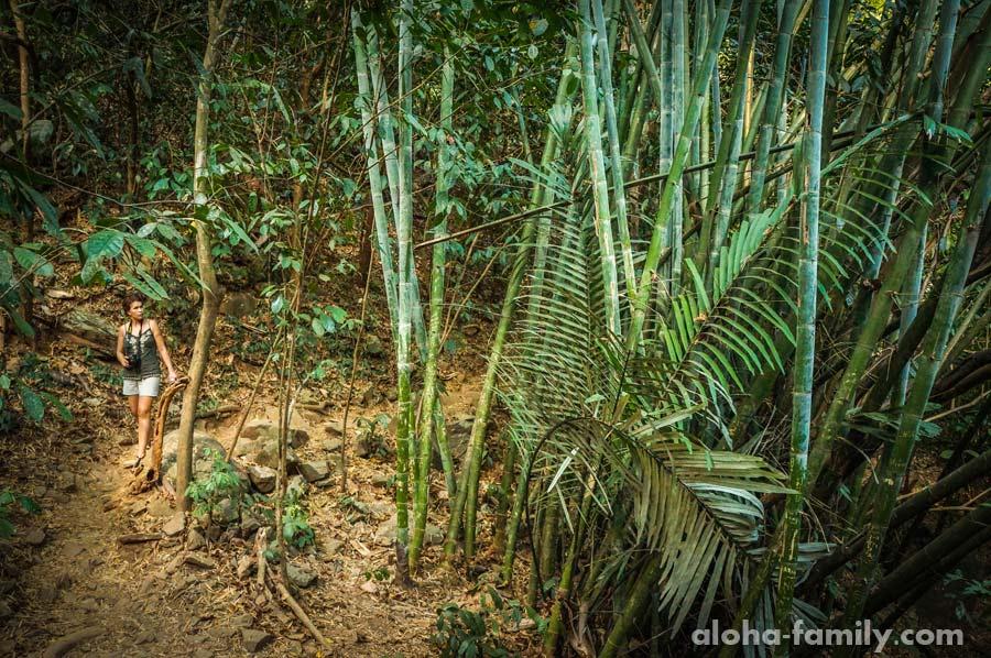 Прогулка в живом бамбуковом лесу