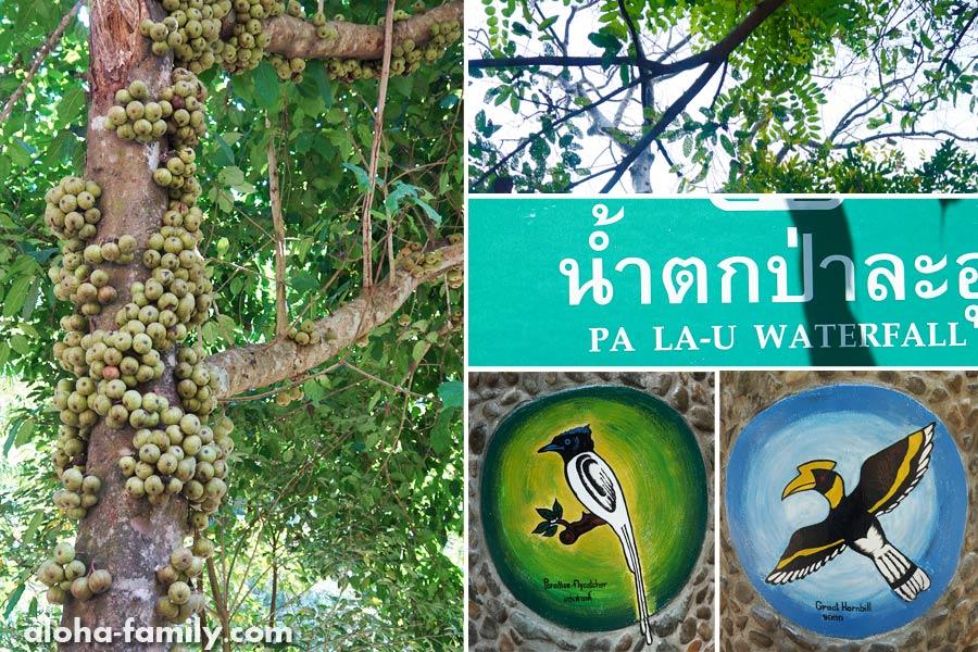 На входе в национальный парк есть чудное дерево и симпатичные таблички