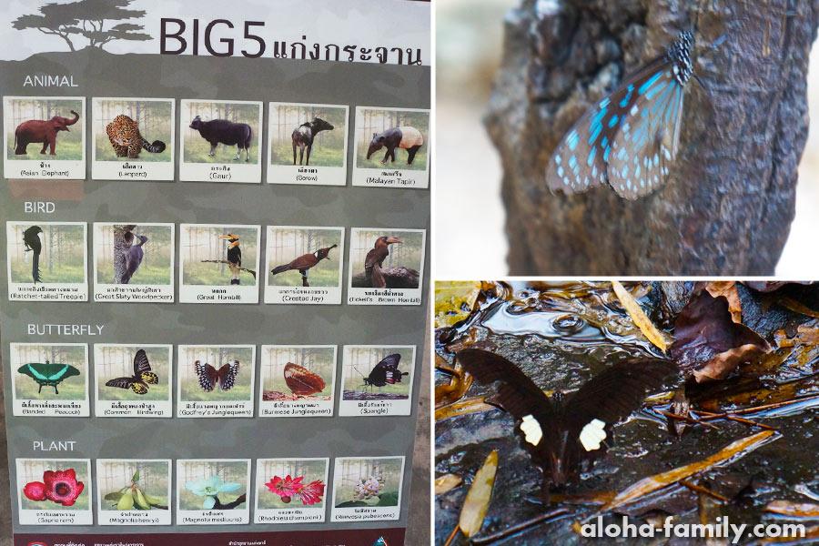 Заповедная флора и фауна описана на многочисленных инфостендах