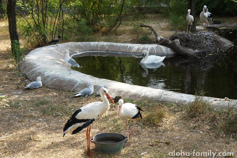 Аисты, лебеди, бакланы и другие белые птицы
