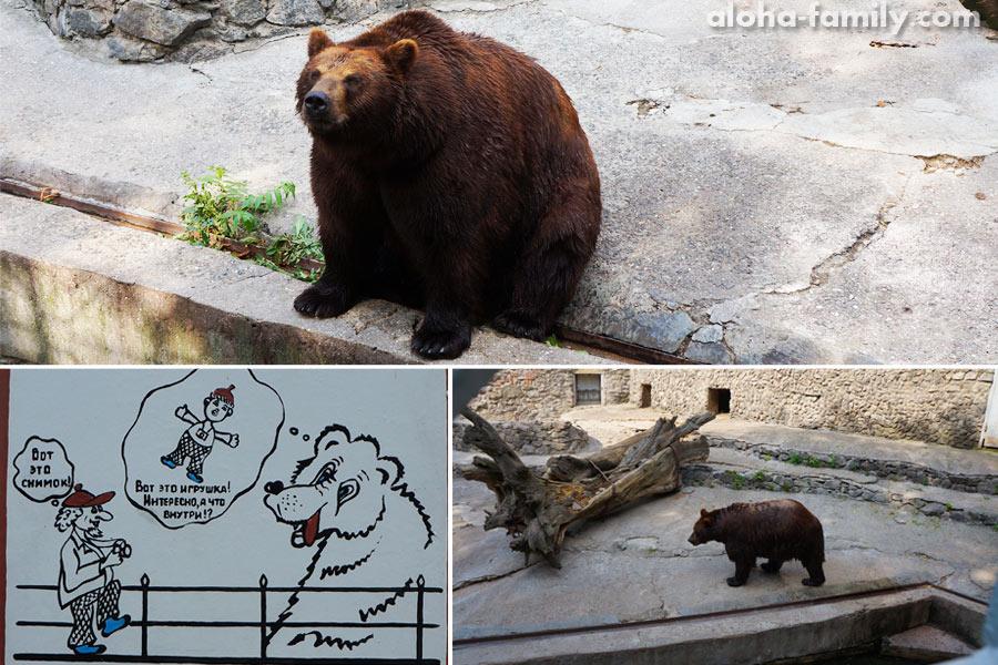 Бурый медведь после принятия бассейна