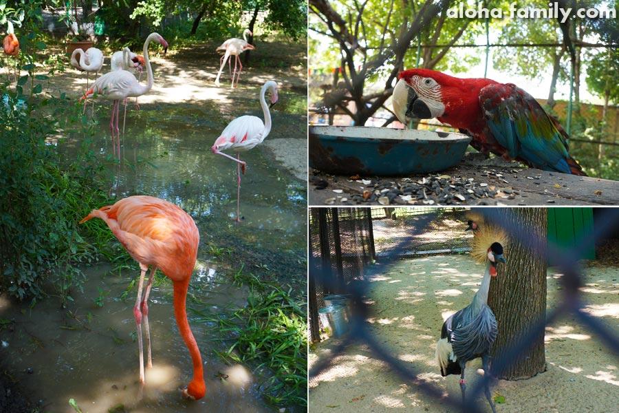 Фламинго, Ара и Журавль восточный венценосный