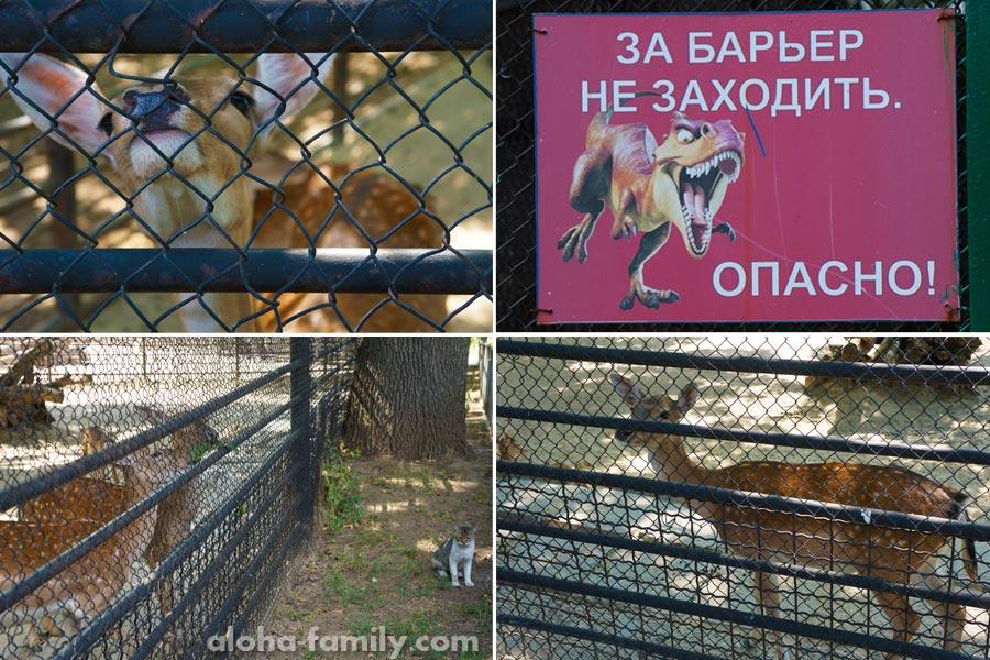 Опасные пятнистые олени и кот смотрящий
