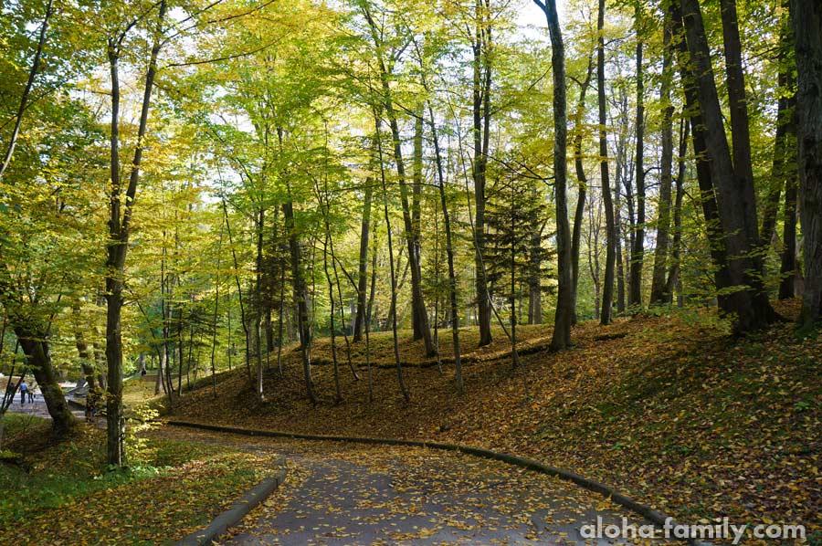 Центральный парк во всей осенней красе