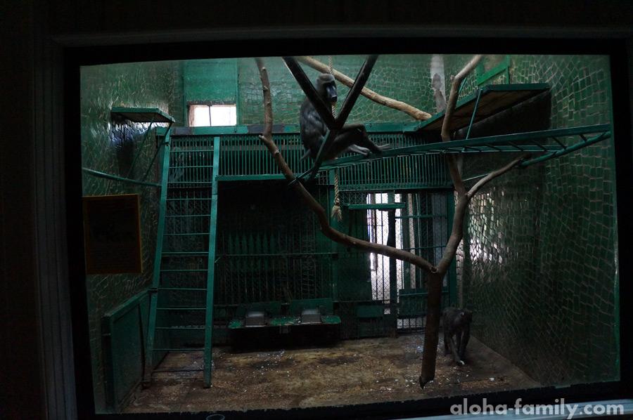 Тюрьма для обезьян