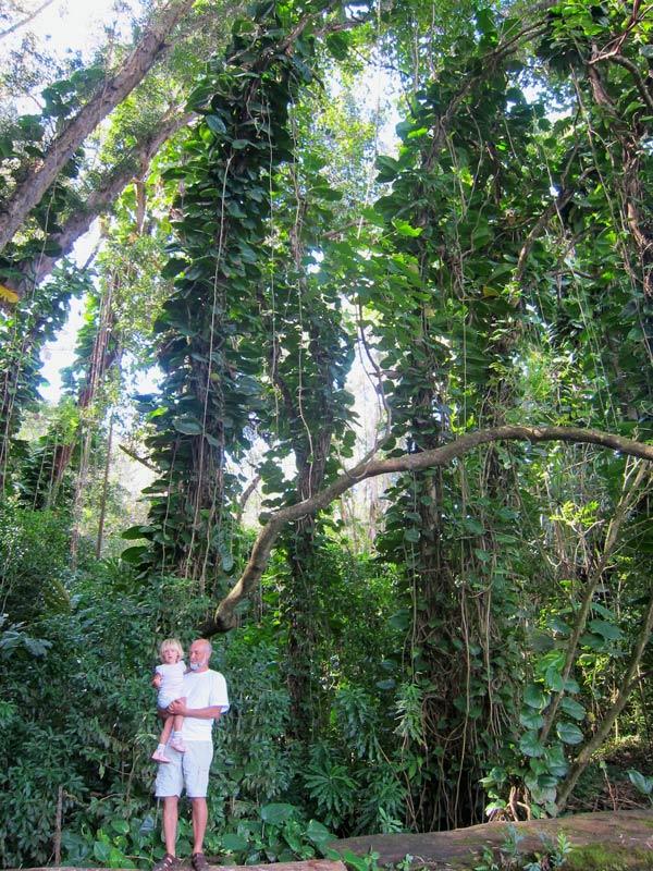 Густые джунгли