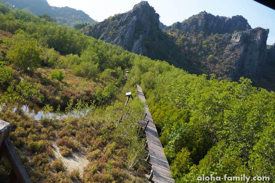 Вид со смотровой вышки в мангровом лесу нацпарка