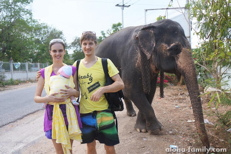 Хуа Хин, 8 мая 2014 - Случайный слон