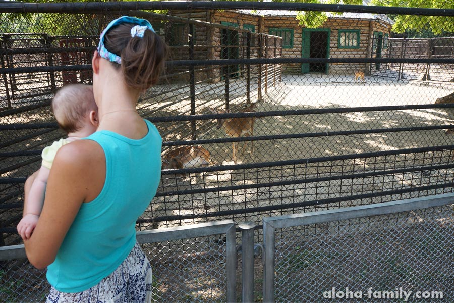 Николаев, 03 августа 2014 - мои девочки и олени