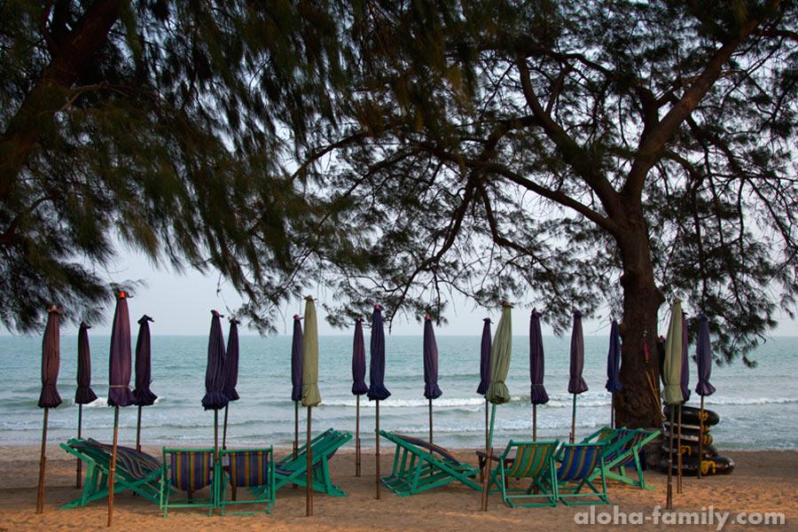 Шезлонги под казуаринами сразу за пляжем