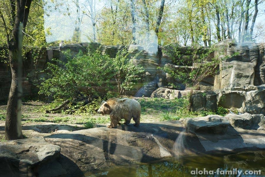 Белый медведь? Или не очень белый!