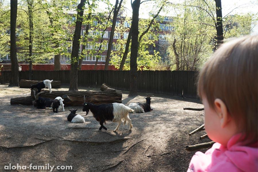 Меня удивили двухцветные козы и жилые дома возле зоопарка. Наверное у них дома пахнет не очень...