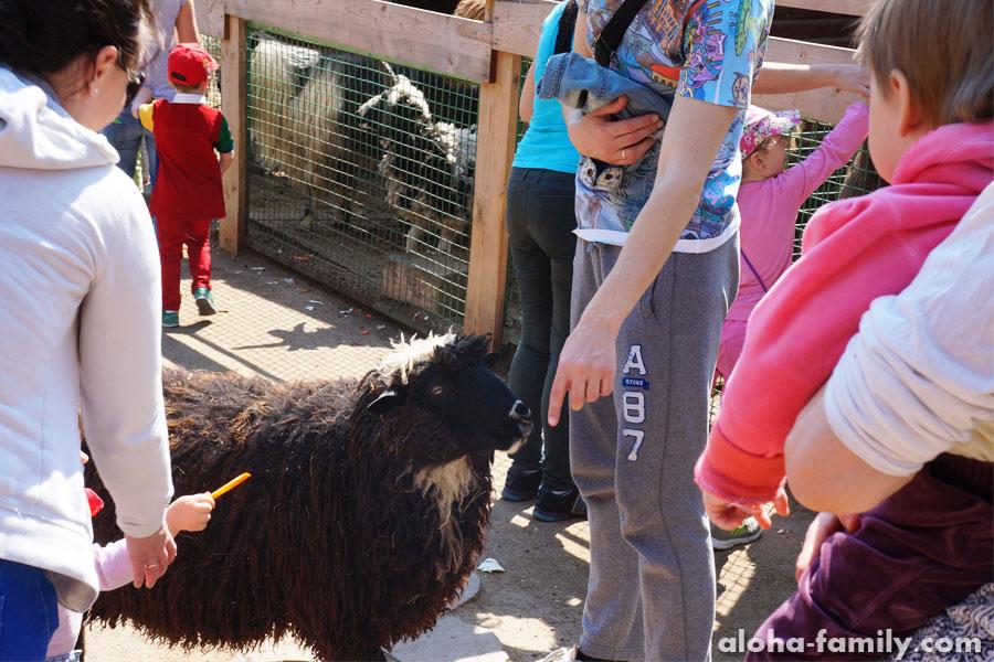 Кормление козы морковкой в детском уголке