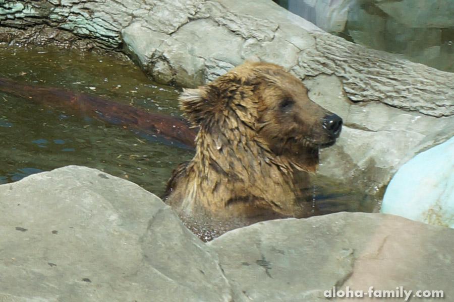 Милое купание медведя