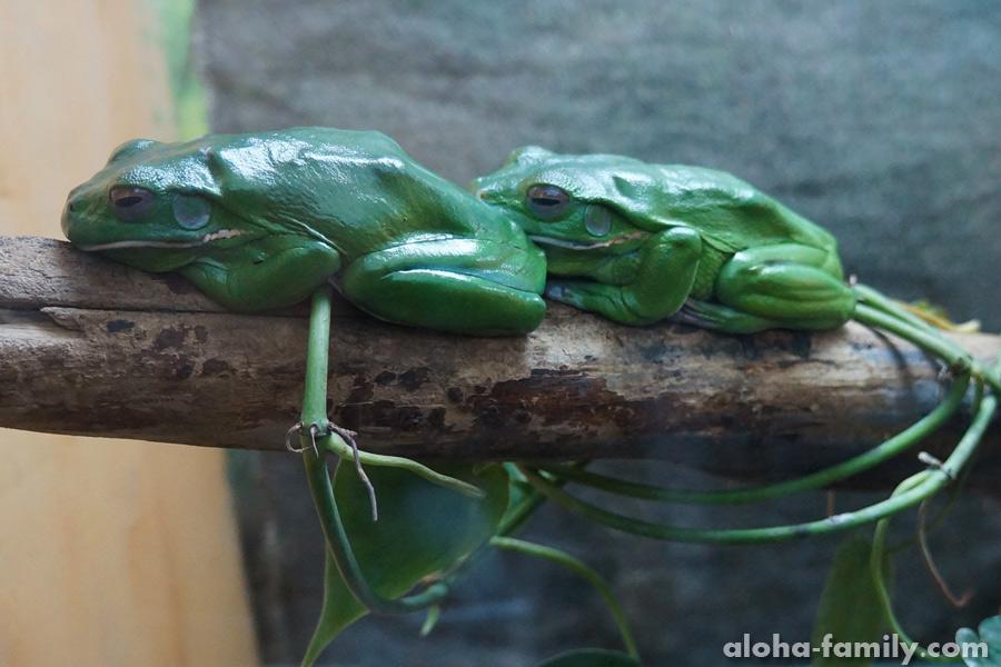 Лягушек много разных, но они сливаются с местностью или спят по углам