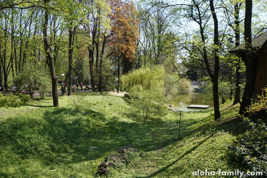 Озерце возле выхода из киевского зоопарка