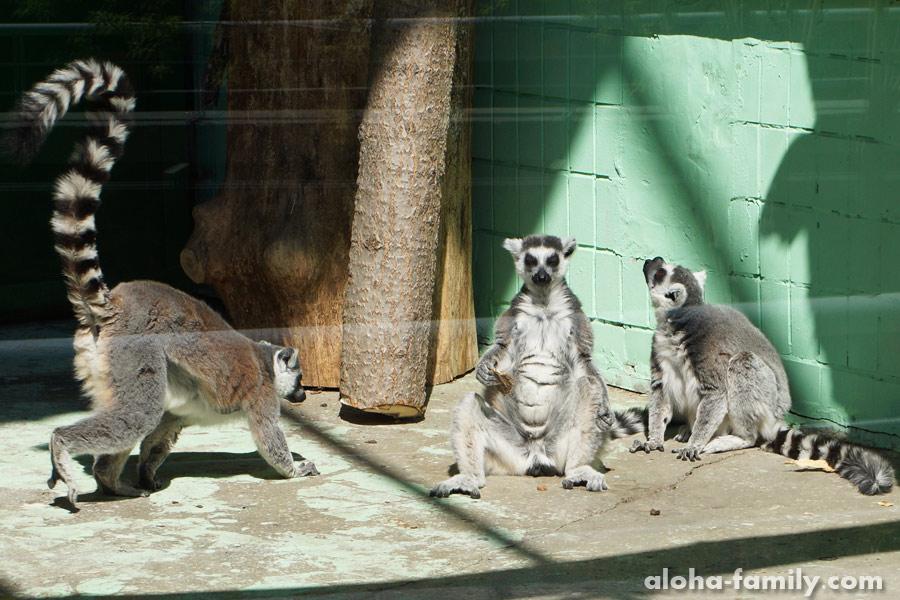 Потешные туристы из Мадагаскара