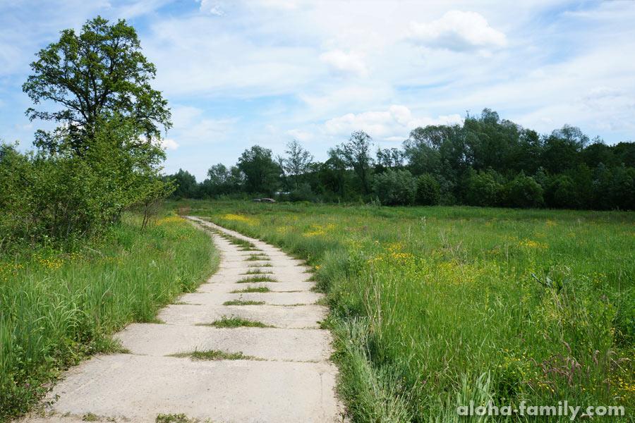 Дорога в лес, 1 июня