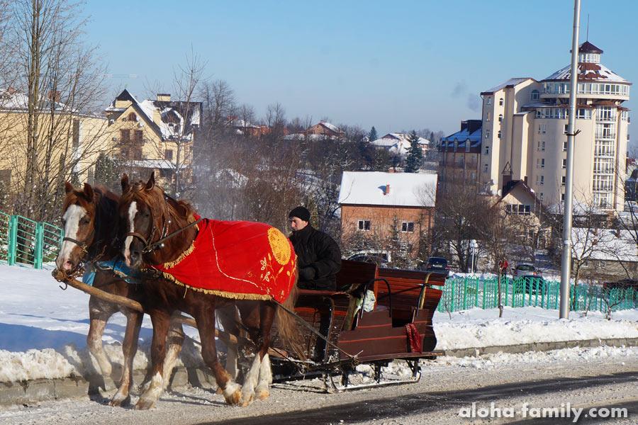 Лошадки радуются снегу